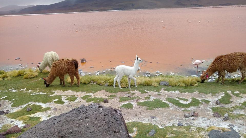 Locating Bolivia