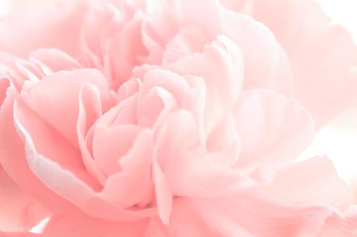 Yumi's Petals, by Poppy Johnson