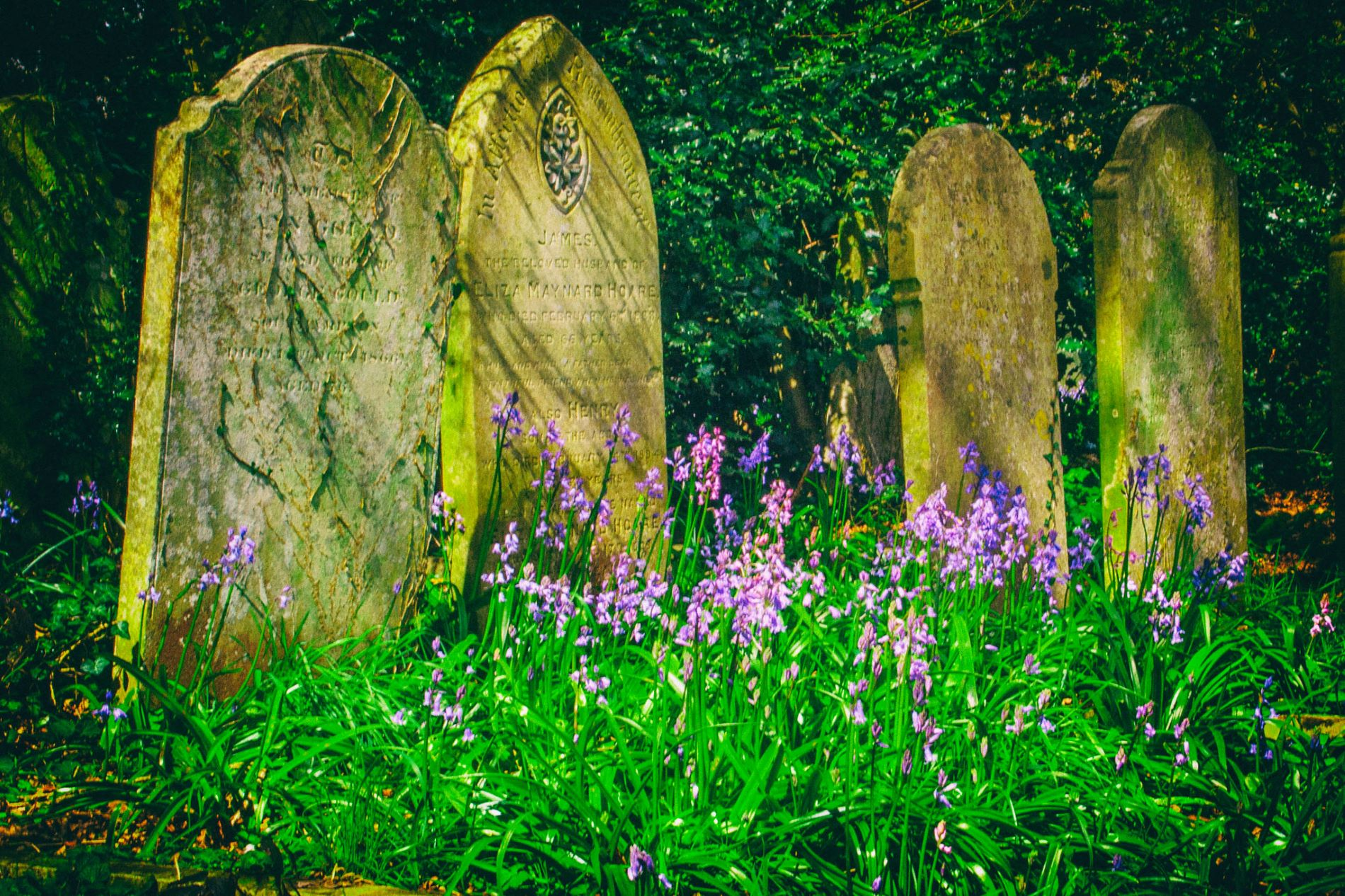 The Old Headstones by Patrick Deeley